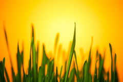 Green grass in warm light Royalty Free Stock Photography