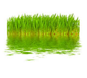 Green grass in water Royalty Free Stock Photography