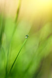 Green grass with water drop and sun light Royalty Free Stock Photo