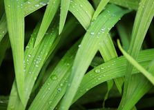 Green grass with water droplet in sunshine Royalty Free Stock Image