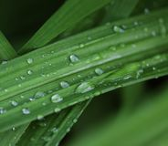 Green grass with water droplet in sunshine Stock Photography