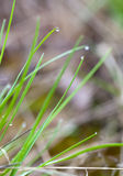 Green grass with water droplets Stock Image