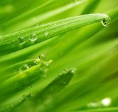 Green grass with water drops on it Royalty Free Stock Photography