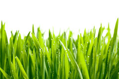 Green grass with water drops Royalty Free Stock Photos