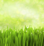 Green Grass with Water Drops / Abstract Background