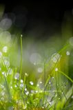 Green grass water drops background Royalty Free Stock Image