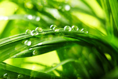 Green grass with water drops Royalty Free Stock Photo