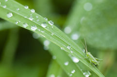 Green grass with water drops Royalty Free Stock Photography