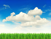 Green grass with water drops cloudy blue sky Royalty Free Stock Images