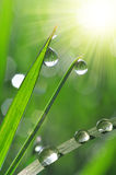 Green grass with water drops Stock Image