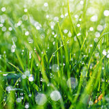 Green grass with water drops Royalty Free Stock Images