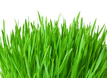 Green grass with water drops isolated on a white background Stock Photos