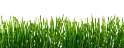 Green Grass with water drops Isolated on White Background Royalty Free Stock Photos