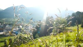 Green grass water drops mountains stock footage
