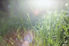 Green grass with water drops in sun rays Stock Photography