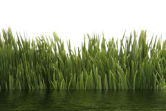 Green grass with water effect Royalty Free Stock Image