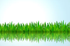 Green grass with water reflection. Isolated green grass with water reflection on blue background Royalty Free Stock Photo