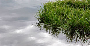 Green grass in water with reflection.  Royalty Free Stock Image