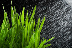 Green grass and water splash Stock Photography