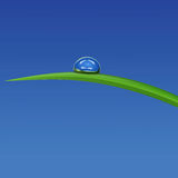 Green grass with waterdrop against blue sky. Drop of dew on a blade of grass on a blue background Stock Photos