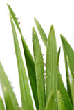 Green grass with waterdrops Stock Photo