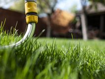 Green grass and watering hose. A house and a garden. uncut grass.  stock photography