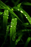 Green grass with watter drops Royalty Free Stock Photo