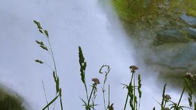 Green grass wave on wind. Cascade of waterfall splash on background. Summer day. Spray. Nature. Water stock video