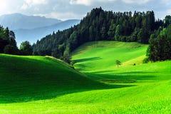 Green grass waves in austrian field Stock Photos
