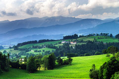 Green grass waves in austrian field Royalty Free Stock Photography
