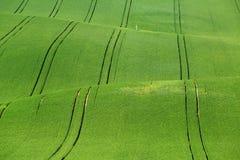 Green grass on wavy field Stock Photo