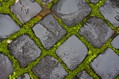 Green grass between wet cobblestones Stock Photo