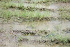 Green grass on wet soil in nature garden. Close up green grass on wet soil in nature garden Stock Images
