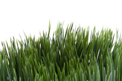 Green Grass on White Stock Photos