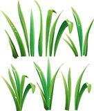 Green grass on white. Vector Illustration Royalty Free Stock Photos