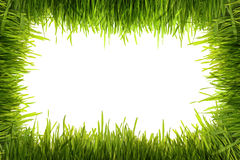 Green grass on a white background. Isolated green grass on a white background Stock Image