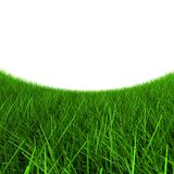 Green grass on a white background. The green grass leaves afar for horizon Royalty Free Stock Image