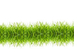 Green grass with white background Stock Images