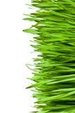 Green grass Stock Photography
