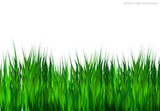 Green grass on white background. Stock Images