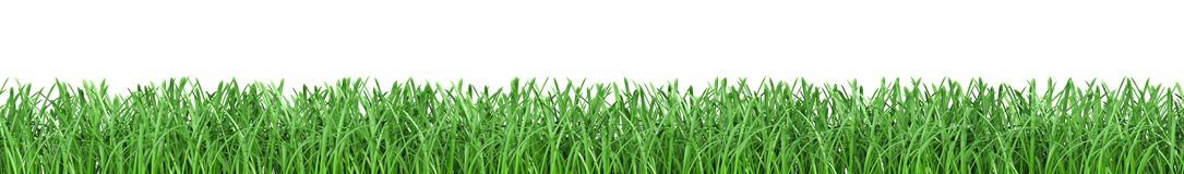 Green grass  on white background.  Royalty Free Stock Photo
