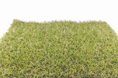 Green grass ,white background. Royalty Free Stock Photography