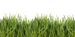 Green Grass on White Background. Isolated Fresh Green Grass on White Background Stock Photography