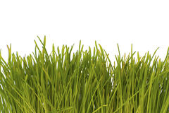 Green grass on a white background below. Stock Photography