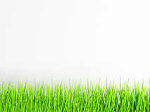 Green grass on the white background. 3d rendering Stock Photo