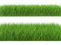 Green grass on white background. 3d rendering green grass on white background Stock Photography