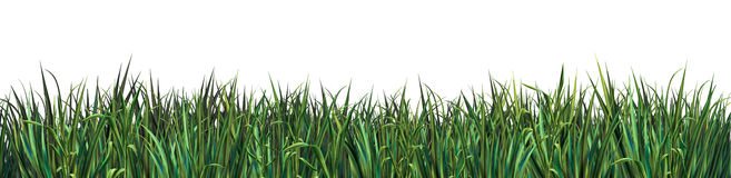 Green grass  on white background Stock Photos