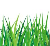 Green grass on a white background Stock Photo