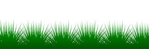 Green grass on white background - illustration. Green grass on white background - vector illustration Stock Photo