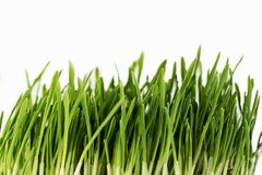 Green grass on white background. The green grass on white background, isolate Stock Photography